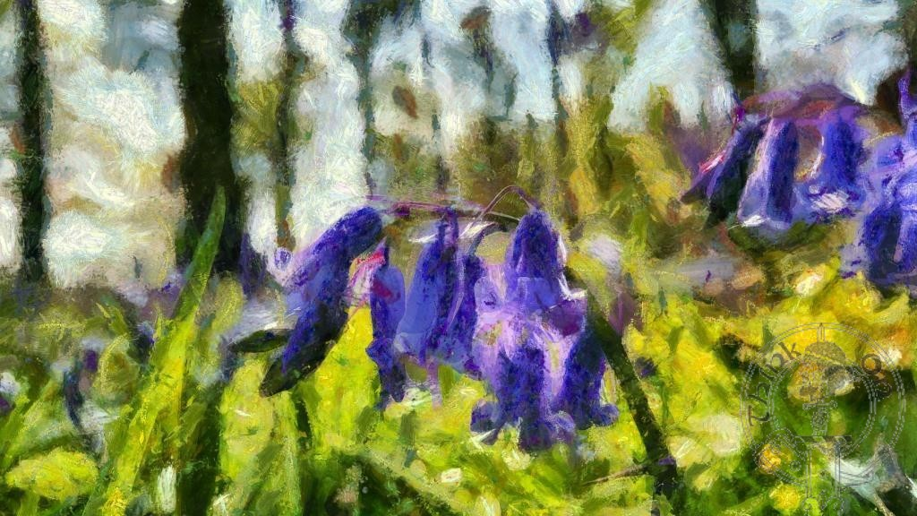 The Bluebell…